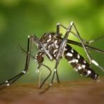 Incrementa el numero de picadures de mosquit en la última década