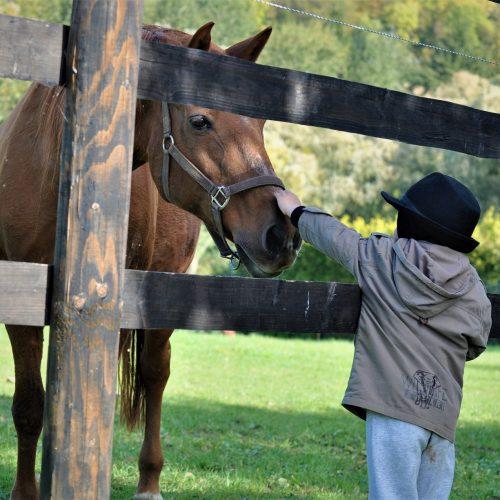 Zooterapia: una cura muy animal